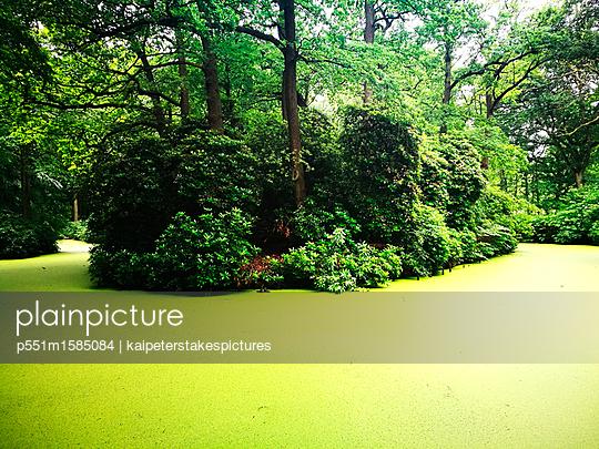 Wie im Dschungel - p551m1585084 von Kai Peters