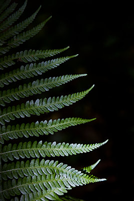 Detail of green fern leaf - p1682m2287981 by Régine Heintz
