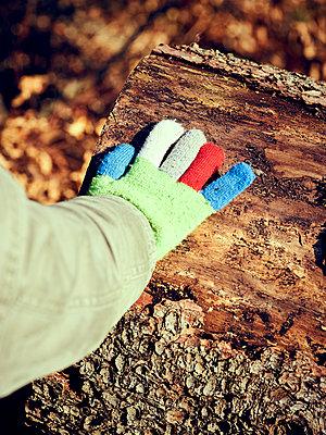 Kinderhand auf Baumstamm - p900m1222067 von Michael Moser