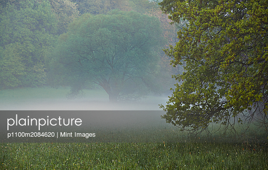 Fog and trees in rural meadow,Hennef, Hennef, Germany - p1100m2084620 by Mint Images