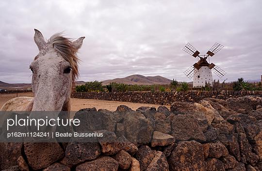 Pferd und Windmühle auf Fuerteventura - p162m1124241 von Beate Bussenius