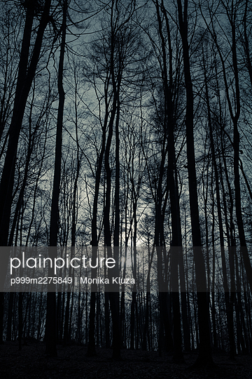 Bare trees in the forest - p999m2275849 by Monika Kluza
