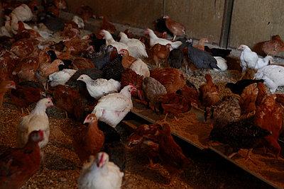 Tierhaltung - p1058m817152 von Fanny Legros