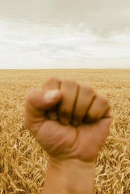A hand making a fist. A Wheatfield. A gesture of defiance.  - p1100m875908f by Paul Edmondson