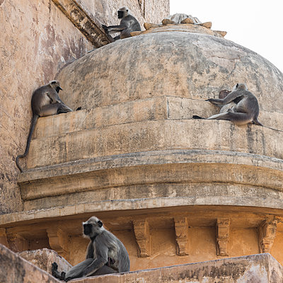 Four macaques on temple roof in Jaipur - p1624m2223719 by Gabriela Torres Ruiz