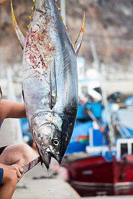 Fisch - p958m1115941 von KL23