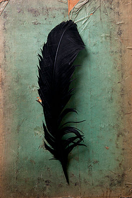 Black feather - p7940527 by Mohamad Itani