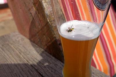 Wespe im Bier - p116m2015418 von Gianna Schade