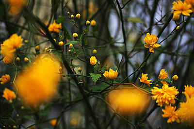 Yellow flower - p4500344 by Hanka Steidle