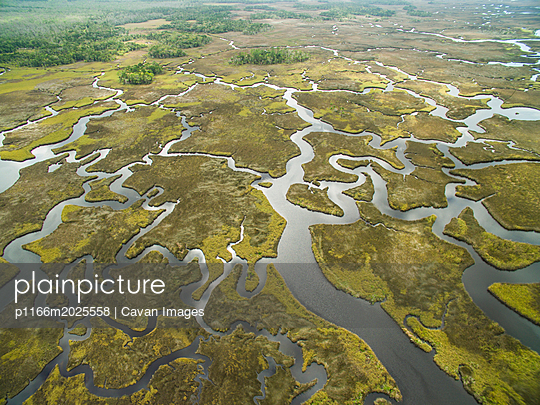 Scenic view of swamp at Chassahowitzka Wildlife Refuge - p1166m2025558 by Cavan Images
