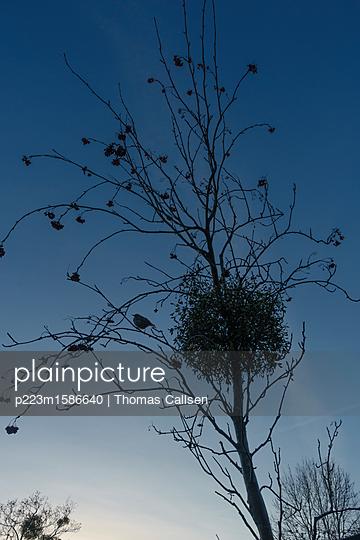 Winterabend. - p223m1586640 von Thomas Callsen