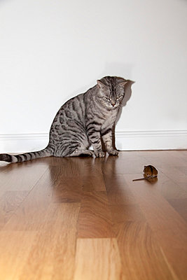 Cat and mouse - p7390737 by Baertels
