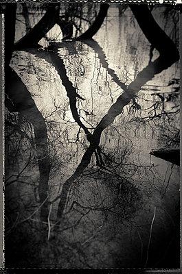 Bäume im Wasser - p1088m1207333 von Martin Benner