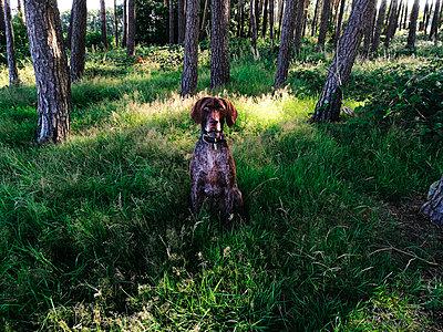 Hund sitzt im Wald - p551m1582911 von Kai Peters