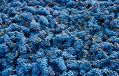 Vineyard - p8850048 by Oliver Brenneisen