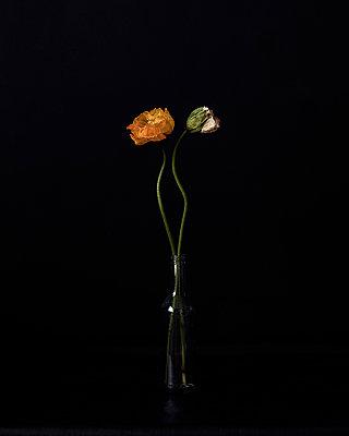 Withered flowers against black background - p1190m2288985 by Sarah Eick