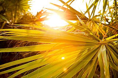 Palme im Gegenlicht - p1386m1452213 von beesch