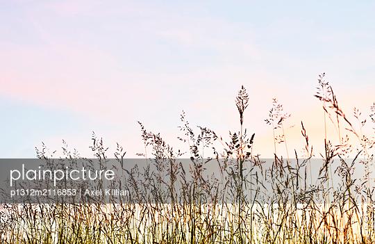 Grasses - p1312m2116853 by Axel Killian