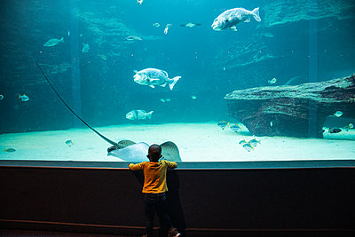 Two Oceans Aquarium, little boy marvels at sea animals - p1640m2246223 by Holly & John