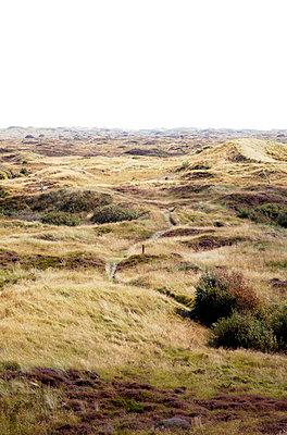 Dünenlandschaft auf Fanö - p382m1591158 von Anna Matzen