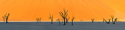 Panoramic view of Dead acacia trees in Dead Vlei, Namibia - p429m935378 by Martin Harvey