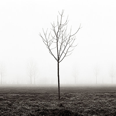 Bare trees in the fog - p5450035 by Ulf Philipowski