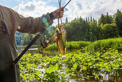 Mari fisherman holding caught fish at rural river - p555m1411648 by Aliyev Alexei Sergeevich