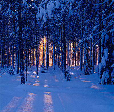 Snow-covered trees - p5750006 by Sven Halling