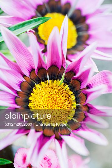 plainpicture - plainpicture p312m2052069 - Pink flowers - plainpicture/Johner/Lina Karna Kippel