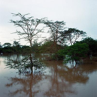 Rainy season - p1160m951393 by Emilie Reynaud