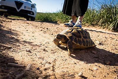 Schildkröte am Strand - p930m1222006 von Phillip Gätz