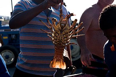 Rock Lobster Crayfish - p941m1559833 von lina gruen