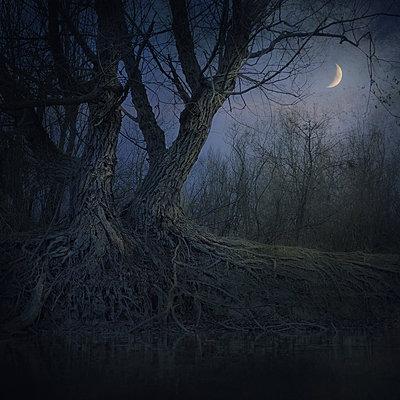 Nocturne - p1633m2210030 by Bernd Webler