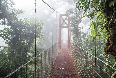 A bridge in the Monteverde Cloud Forest biological reserve Costa Rica - p1166m2153506 by Cavan Images