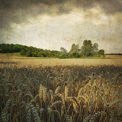 Field Study - p1633m2277946 by Bernd Webler