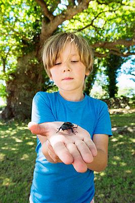 Boy holding beetle - p312m1024882f by Hans Berggren