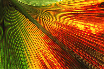 Colorful palm frond in rainforest on Praslin Island in Seychelles - p34811152 by Chad Ehlers