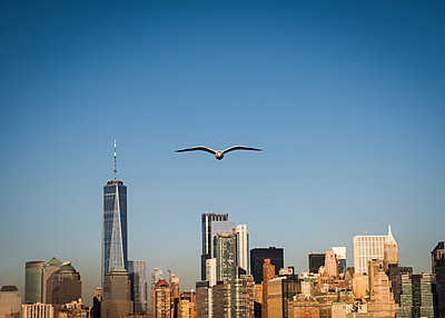 Single seagull in the sky, New York skyline in the background - p758m2222564 by L. Ajtay