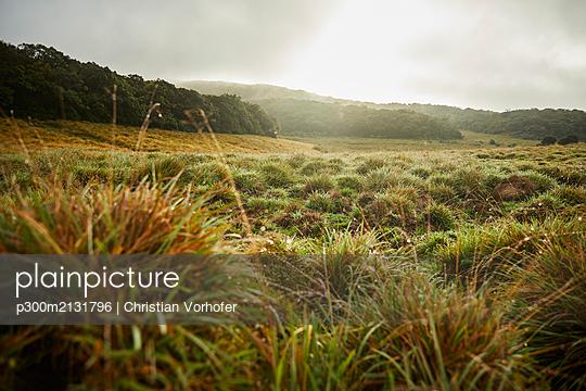 Landscape at Horton Plains National Park, Nuwara Eliya, Sri Lanka - p300m2131796 by Christian Vorhofer