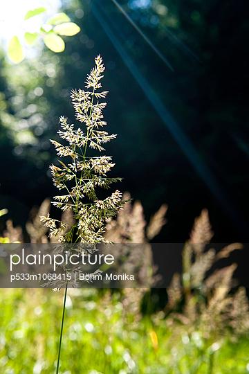 Sonnenstrahlen in einer Waldlichtung - p533m1068415 von Böhm Monika