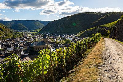 Im Weingebiet - p1271m1539702 von Maurice Kohl