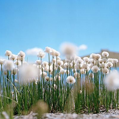 Blumen - p1468m1528617 von Philippe Leroux