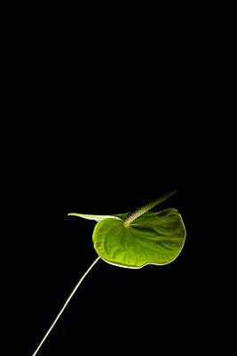 Flamingoblume, LED - p1338m1181720 von Birgit Kaulfuss