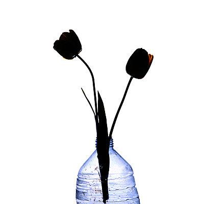 Tulips - p813m778780 by B.Jaubert