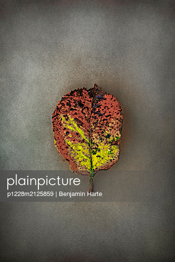 Autumn leaf - p1228m2125859 by Benjamin Harte