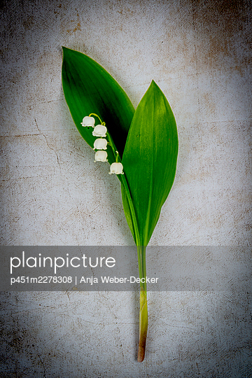 Lily of the valley - p451m2278308 by Anja Weber-Decker