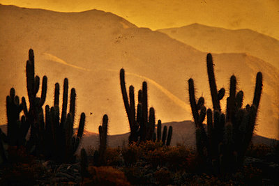 Desert - p148m1034777 by Axel Biewer