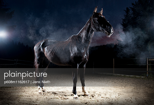 Pferd - p608m1162617 von Jens Nieth