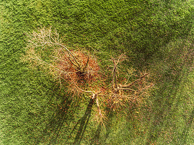Bald trees in autumn, aerial view - p586m1104957 by Kniel Synnatzschke