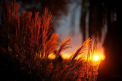 Stimmungsvoller Sonnenuntergang - p1169m1032714 von Tytia Habing